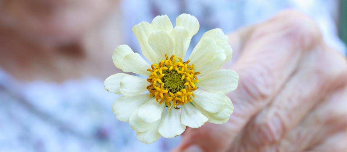 flower-slider1